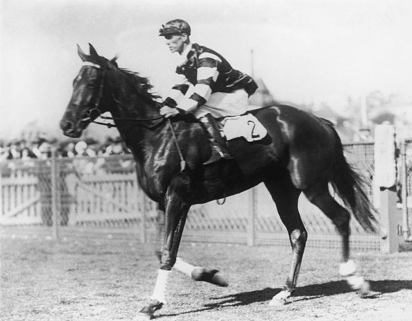 Horse「Phar Lap」:写真・画像(3)[壁紙.com]