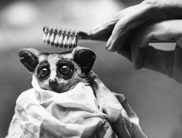 Animal「Wilfred's Toilet」:写真・画像(9)[壁紙.com]