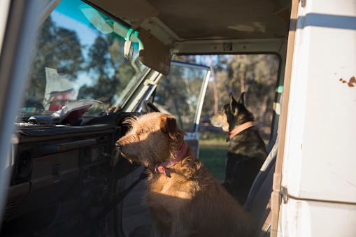 Passenger Cabin「Rural New South Wales, Australia」:スマホ壁紙(9)