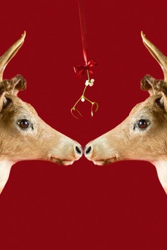 reindeer「Reindeer underneath mistletoe」:スマホ壁紙(0)