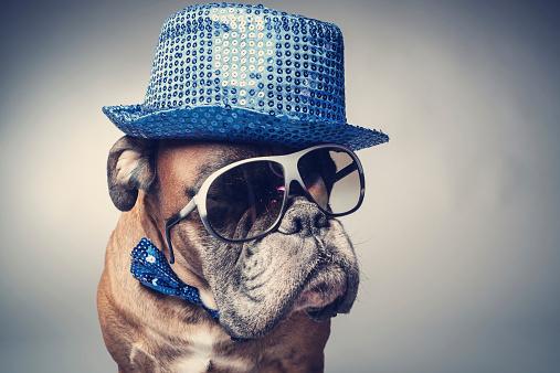 Boxer - Dog「Party dog」:スマホ壁紙(0)