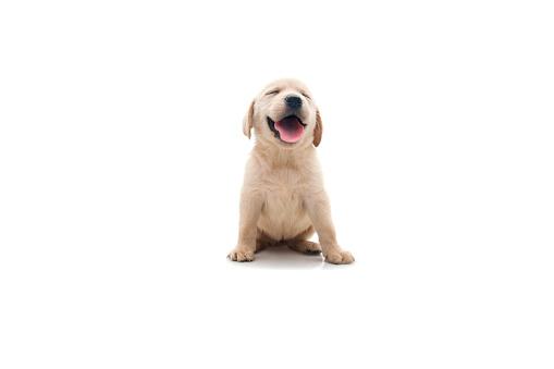 Cute「happy dog」:スマホ壁紙(12)