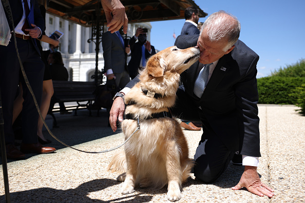 Domestic Animals「House Members Discuss New Veterans Therapy Act Using Service Dogs」:写真・画像(14)[壁紙.com]