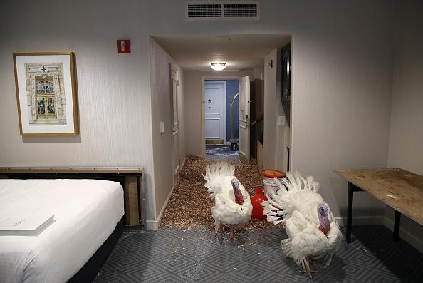 Carrot「National Thanksgiving Turkeys Meet The Press Before Official Presidential Pardon」:写真・画像(7)[壁紙.com]