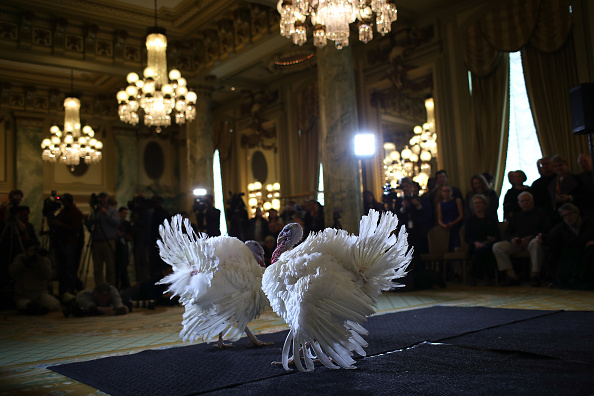 Carrot「National Thanksgiving Turkeys Meet The Press Before Official Presidential Pardon」:写真・画像(5)[壁紙.com]