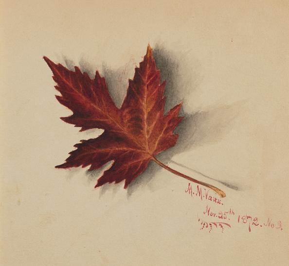 かえでの葉「Untitled (Autumn Leaf)」:写真・画像(17)[壁紙.com]