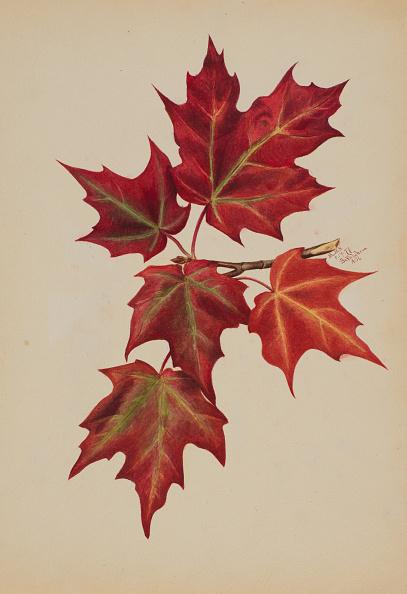 かえでの葉「Untitled (Autumn Leaves)」:写真・画像(11)[壁紙.com]