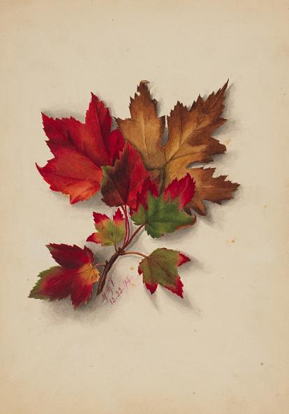 かえでの葉「Untitled (Autumn Leaves)」:写真・画像(2)[壁紙.com]