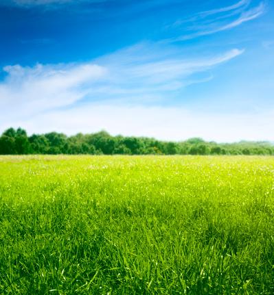 Savannah「Spring on meadow. Fresh grass and beautiful clouds.」:スマホ壁紙(0)