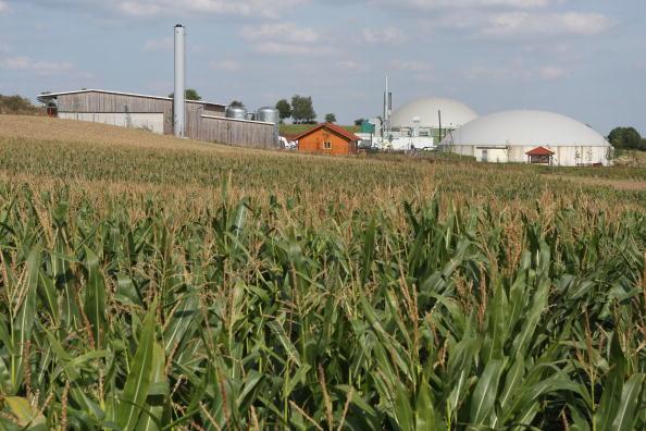 Ecosystem「Interest In Bioenergy On the Rise」:写真・画像(4)[壁紙.com]