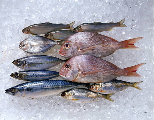 Assortment of fish on ice:スマホ壁紙(壁紙.com)