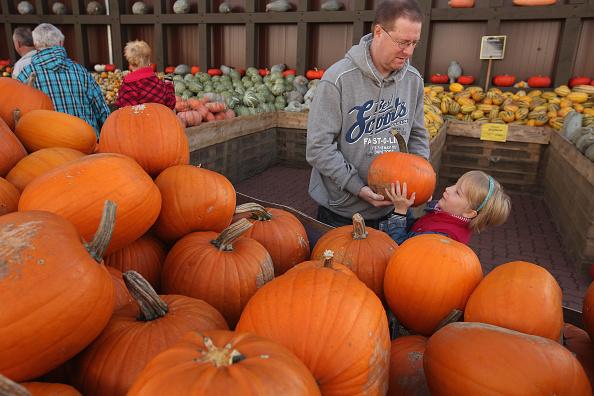 Beelitz「Autumn Is Pumpkin Season In Brandenburg」:写真・画像(6)[壁紙.com]