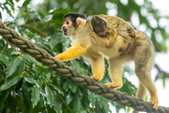 Animal Themes「Animals At Taronga Zoo」:写真・画像(19)[壁紙.com]