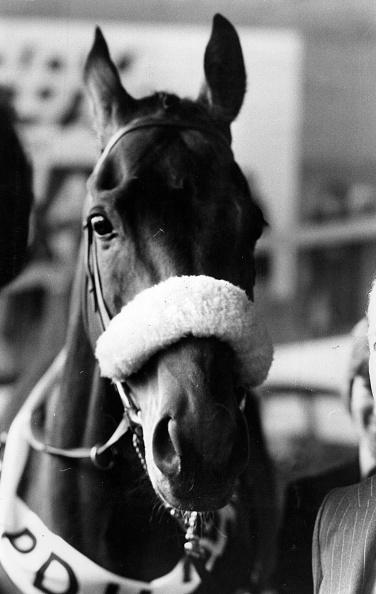 Horse「Red Rum」:写真・画像(14)[壁紙.com]