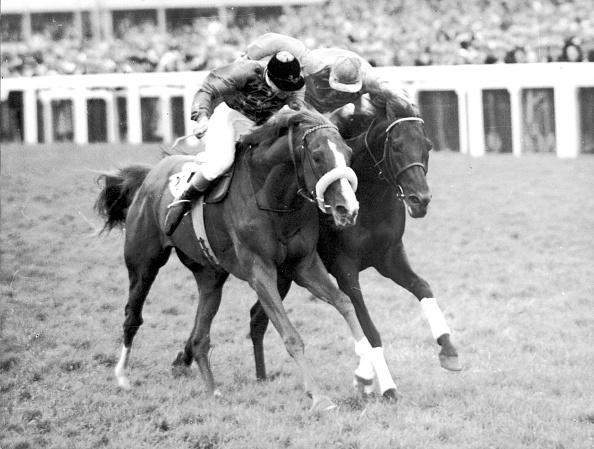 Horse「Aureole At Ascot」:写真・画像(2)[壁紙.com]