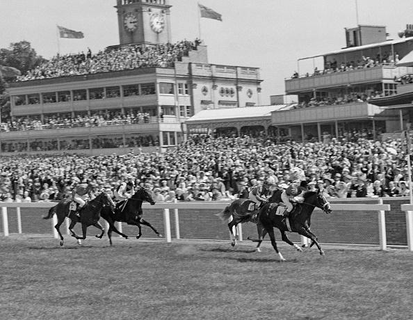 Racehorse「Royal Ascot」:写真・画像(10)[壁紙.com]
