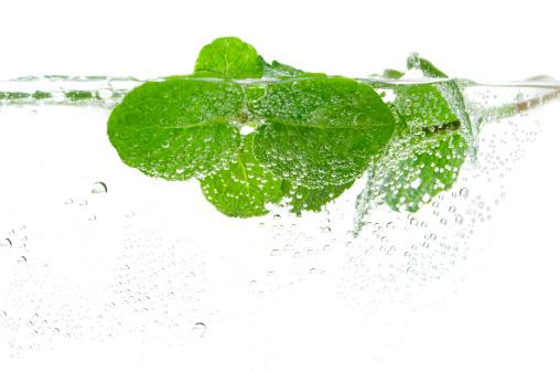 Mint Leaf - Culinary「Fresh mint in water」:スマホ壁紙(5)