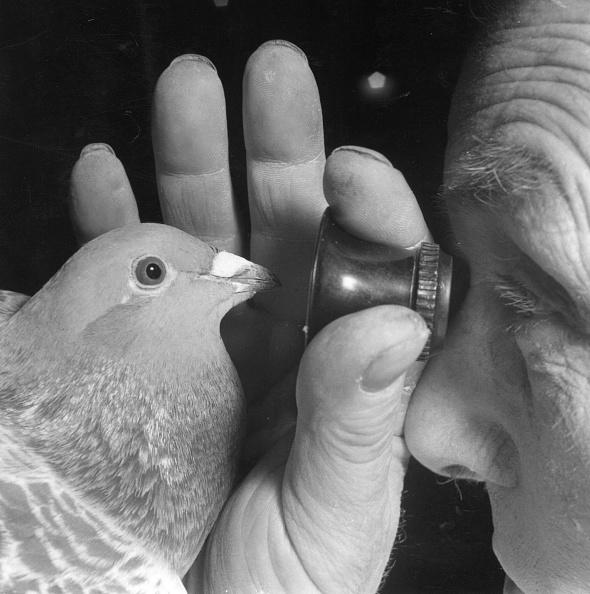 Profile View「Looking At Pigeon」:写真・画像(16)[壁紙.com]