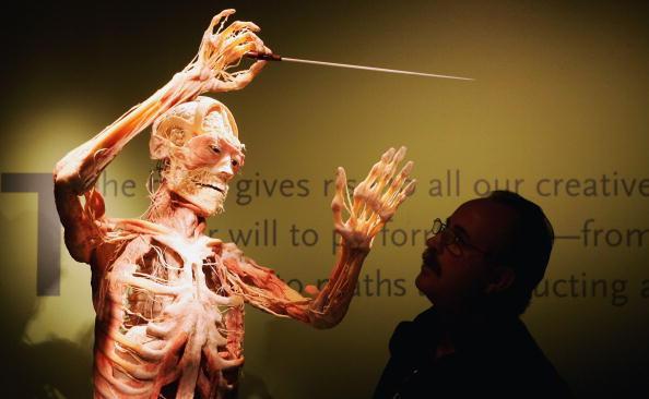 Development「Bodies Exhibition Opens In London」:写真・画像(0)[壁紙.com]