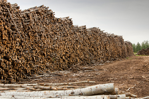 Amazon Rainforest「Boreal forest trees clear felled to make way for a new tar sands mine north of Fort McMurray」:スマホ壁紙(15)