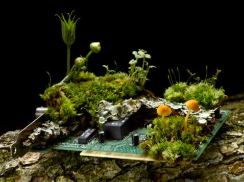 Circuit Board「Circuit board with moss and mushrooms, close-up」:スマホ壁紙(4)