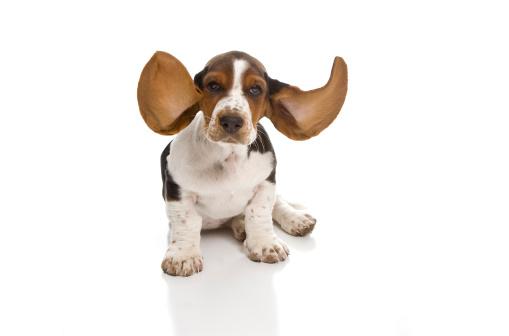 Puppy「I'm Listening」:スマホ壁紙(16)