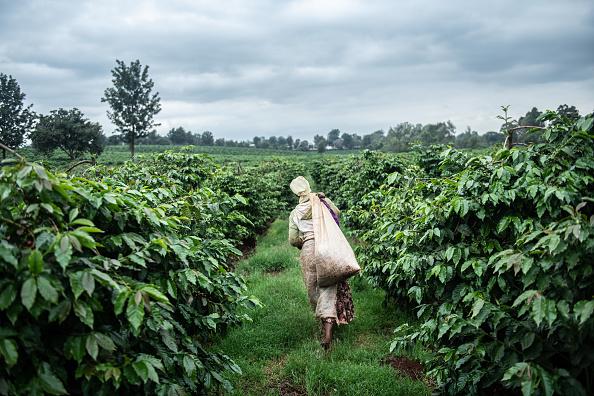 Kenya「Kenya's Coffee Producers, Long Focused On Export, Grow A Coffee Culture At Home」:写真・画像(19)[壁紙.com]