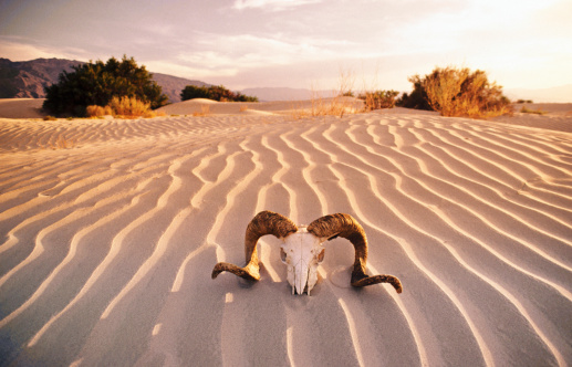 "質感「""Rams's skull in desert, Death Valley, California, USA.""」:スマホ壁紙(11)"