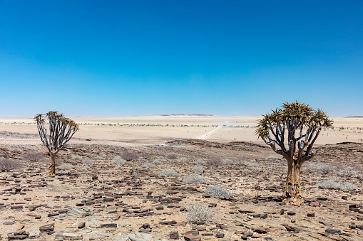 Moon「Quiver trees and savanna in Namib-Naukluft National Park in Erongo Region, Namibia, 2018」:スマホ壁紙(12)