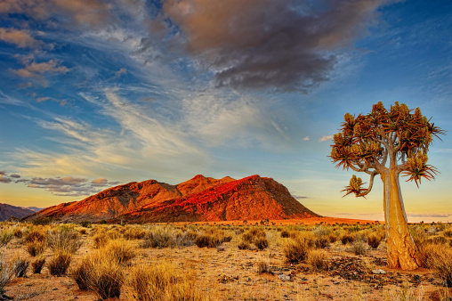 South Africa「Quiver tree at dusk」:スマホ壁紙(9)