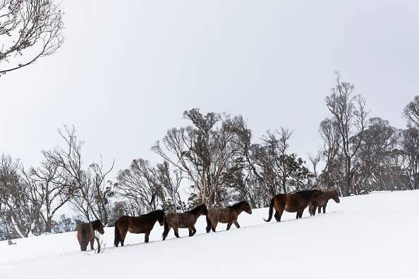 Horse「Taming The Brumby: Finding A New Home For Australia's Wild Horses」:写真・画像(15)[壁紙.com]