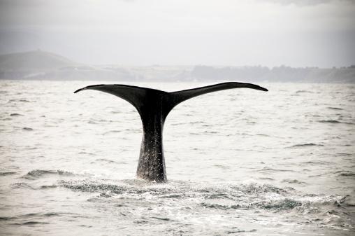 Named Animal「Diving Whale」:スマホ壁紙(12)