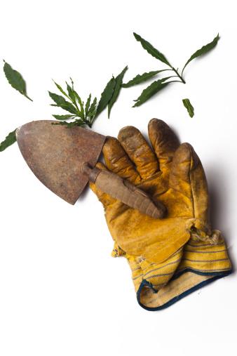 Planting「Gardening」:スマホ壁紙(14)