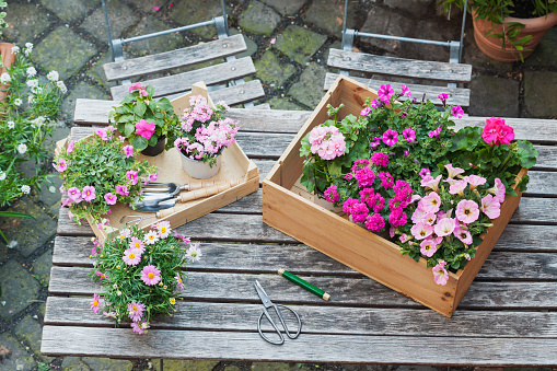 Gardening「Gardening, planting of summer flowers」:スマホ壁紙(2)