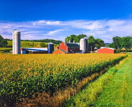 Agricultural Building「Corn crop and Iowa farm at harvest time」:スマホ壁紙(7)