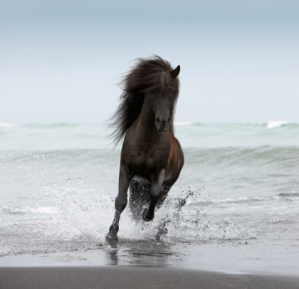 Horse「Stallion running on Beach」:スマホ壁紙(19)