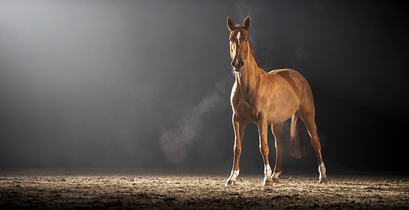 Horse「Brown horse standing in riding hall」:スマホ壁紙(15)