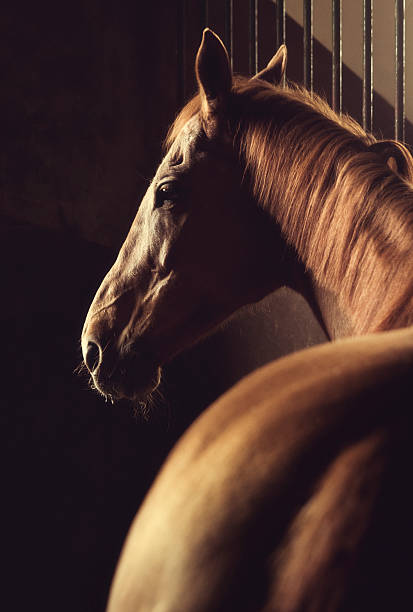 Brown horse headshot in stable:スマホ壁紙(壁紙.com)