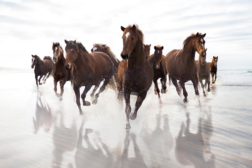 Horse「Brown Horses running on a beach」:スマホ壁紙(1)