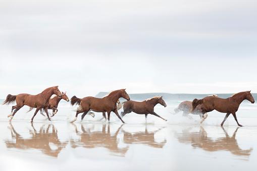 Horse「Brown Horses running on a beach」:スマホ壁紙(7)