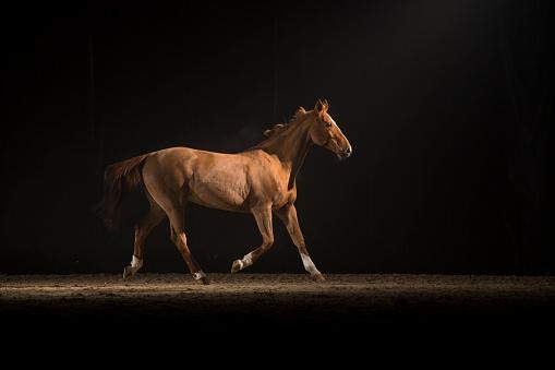 Horse「Brown horse running」:スマホ壁紙(14)