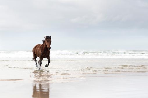 Horse「Brown horse running on a beach」:スマホ壁紙(7)