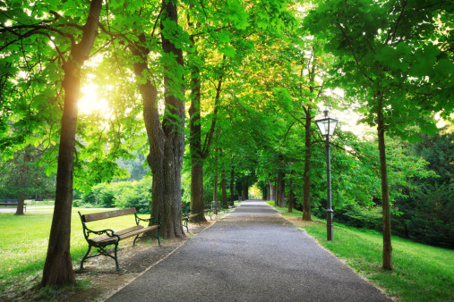 樹木「日の出は、グリーンパーク」:スマホ壁紙(8)