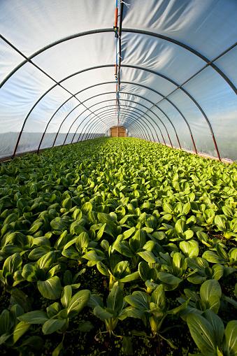Planting「Organic greenhouse」:スマホ壁紙(18)