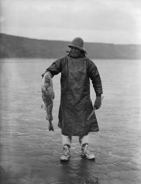 Fisherman「Fish Dinner」:写真・画像(16)[壁紙.com]