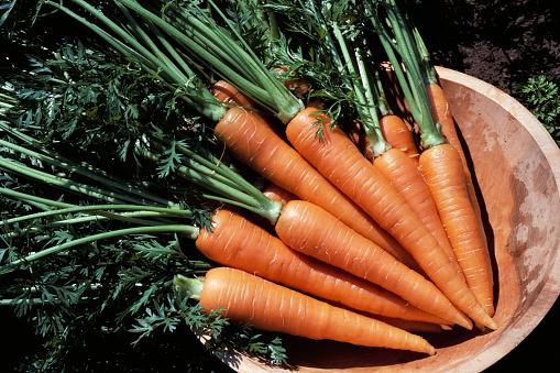 Carrot「Carrots in Bowl」:スマホ壁紙(11)