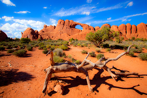 Dead Animal「Skyline Arch at Arches National Park, on a perfect day, with a ancient dead tree that resembles an animal in the foreground」:スマホ壁紙(1)