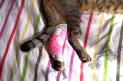 Duvet「cat with bandaged front paw」:スマホ壁紙(2)