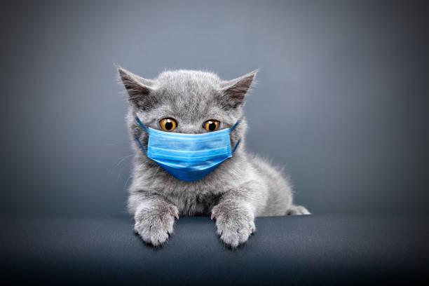 Protective face masked cat:スマホ壁紙(壁紙.com)