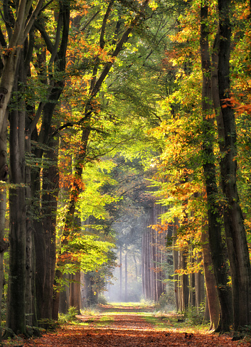 Light at the End of the Tunnel「Majestic avenues in autumn leaf colors」:スマホ壁紙(14)